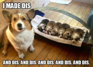 funny-corgi-puppy-bed